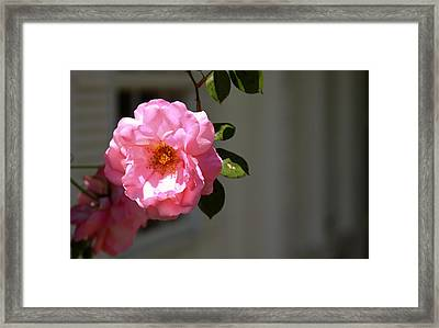 Cheerful Solo Framed Print