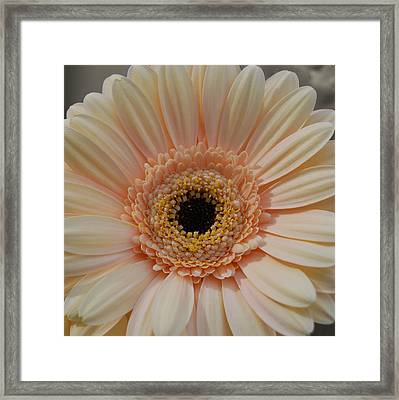 Cheeriest Flower Framed Print by JAMART Photography