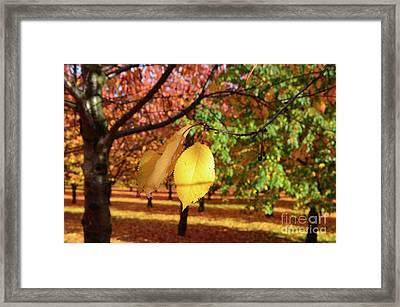 Framed Print featuring the photograph Cheery Tree Sheet by Bruno Santoro