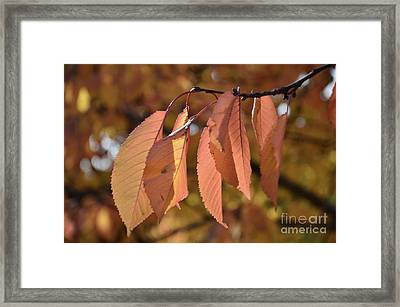 Framed Print featuring the photograph Cheery Tree Sheets 1 by Bruno Santoro