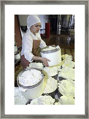 Cheese Production, Mould Filling Framed Print