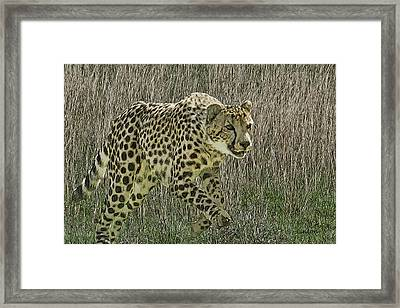 Cheetah 6 Framed Print