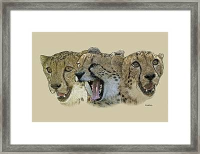 Cheetah Faces Framed Print by Larry Linton
