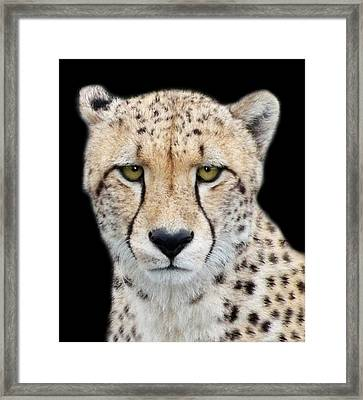 Framed Print featuring the photograph Cheetah by Lynn Bolt