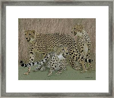 Cheetah Montage 2 Framed Print by Larry Linton