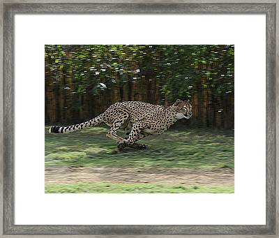 Cheetah Run Framed Print