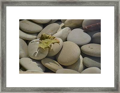 Chelsea Pebbles Framed Print by Dickon Thompson
