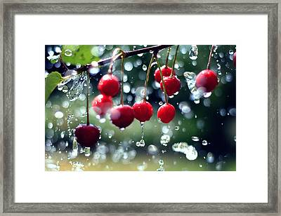 Cherries Framed Print by Falko Follert