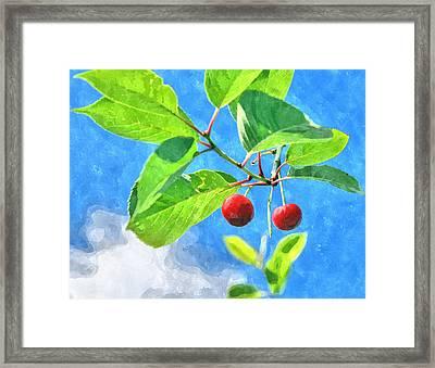 Cherry Berries Framed Print by Aleksandr Volkov