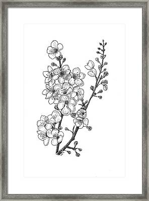 Cherry Blossems Framed Print