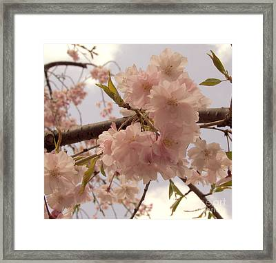 Framed Print featuring the photograph Cherry Blossom 2 by Andrea Anderegg