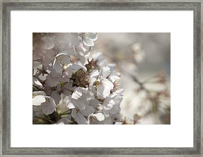 Framed Print featuring the photograph Cherry Blossom 2 by Lisa Missenda