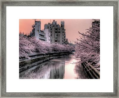Cherry Blossom Framed Print by Akirat2011, All Right Reserved.
