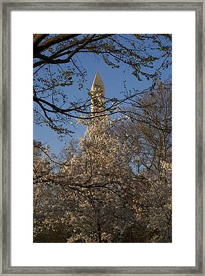 Cherry Blossom Dc Framed Print