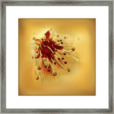 Cherry Blossom Detail Framed Print by Li   van Saathoff