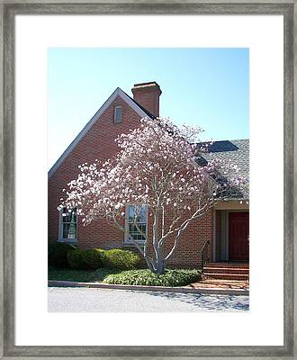 Framed Print featuring the photograph Cherry Blossom by Pamela Hyde Wilson