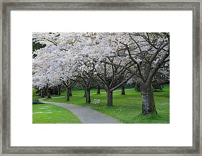 Cherry Blossom Park Framed Print by Pierre Leclerc Photography