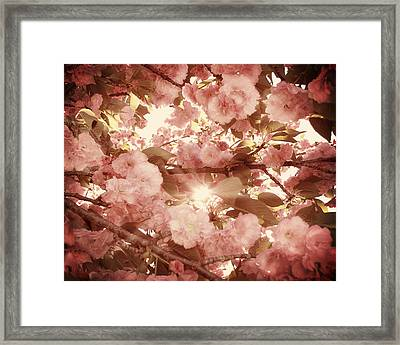 Cherry Blossom Sky Framed Print by Amy Tyler
