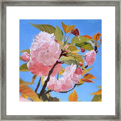 Cherry Blossom Time Framed Print by Leah Hopkins Henry
