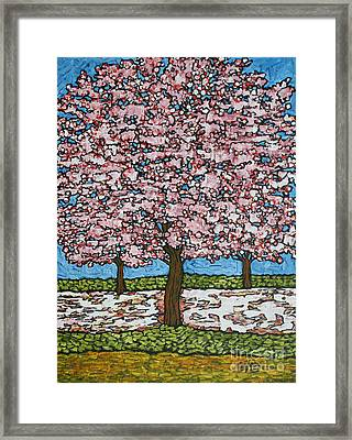 Cherry Blossom Trio Framed Print by Tracy Levesque