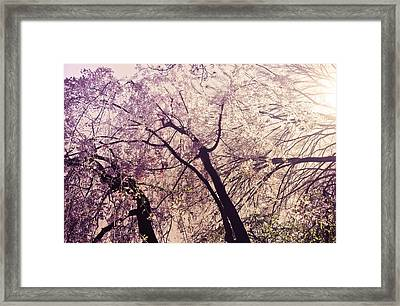 Cherry Blossoms - New York City Framed Print by Vivienne Gucwa
