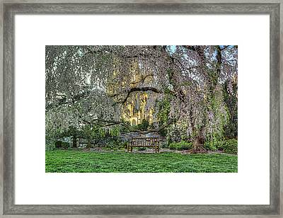 Cherry Blossoms At The Washington National Cathedral Framed Print by Metro DC Photography
