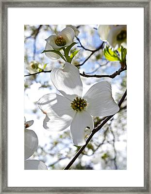 Cherry Blossoms I Framed Print by Glennis Siverson