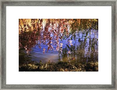 Cherry Blossoms In The Sun - New York City Framed Print