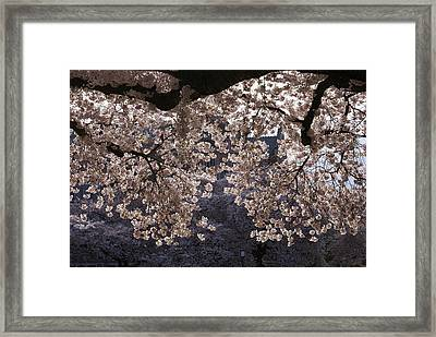 Framed Print featuring the photograph Cherry Blossoms by Jerry Cahill