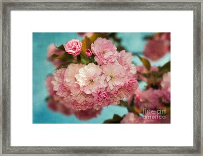 Cherry Blossoms Kanzan Three Framed Print by Susan Isakson