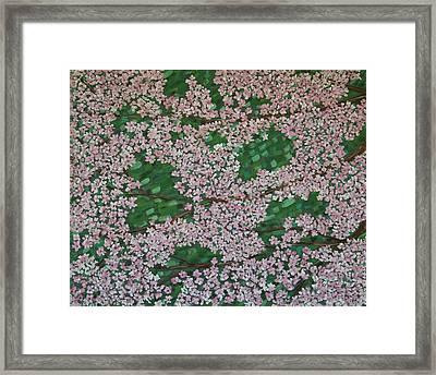 Cherry Blossoms Framed Print by Karen Alonge