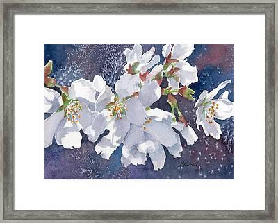 Cherry Blossoms Framed Print by Marsha Elliott