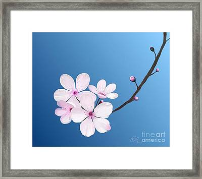 Cherry Blossoms Framed Print by Rand Herron