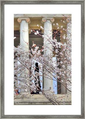 Cherry Blossoms Washington Dc 1 Framed Print by Metro DC Photography