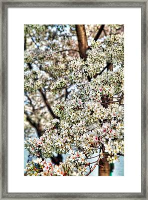 Cherry Blossoms Washington Dc 2 Framed Print by Metro DC Photography