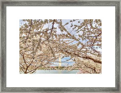 Cherry Blossoms Washington Dc 3 Framed Print
