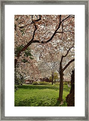 Cherry Blossoms Washington Dc 5 Framed Print by Metro DC Photography