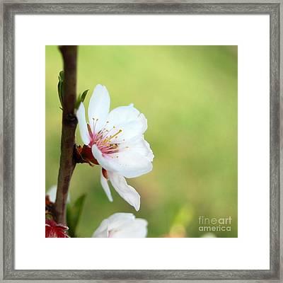 Cherry In Green Framed Print