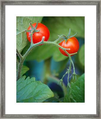 Cherry Framed Print by Miranda Mehrer