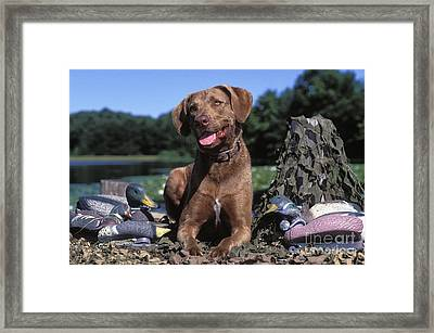 Chessie And Decoys - Fs000666 Framed Print by Daniel Dempster