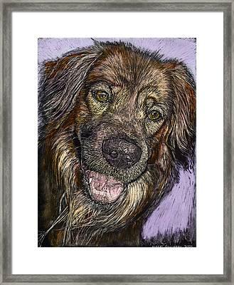 Chester The Dog Framed Print by Robert Goudreau