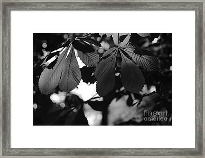 Chestnut Leaves Framed Print by Dariusz Gudowicz