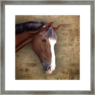 Chestnut Pony Portrait Framed Print