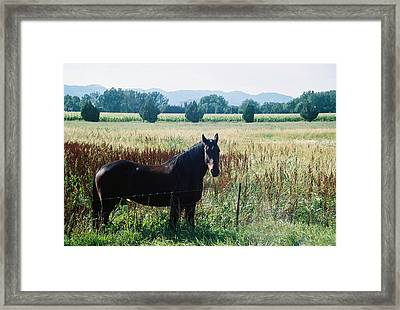 Chestnut Framed Print