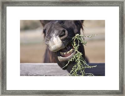 Framed Print featuring the photograph Chew On This by Kate Purdy
