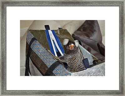 Chewy The Marmoset Going Fishing Framed Print by Barry R Jones Jr