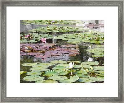 Chi Lin Lily Pond Framed Print