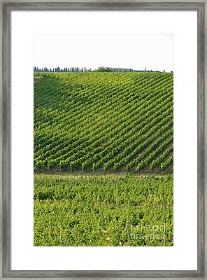 Chianti Vineyards Framed Print by Sami Sarkis