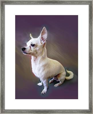 Framed Print featuring the photograph Chichi by Ginny Schmidt