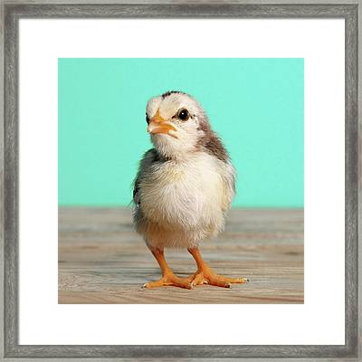 Chick On Wood Framed Print by Retales Botijero